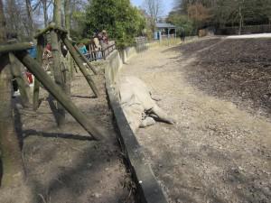 de neushoorn